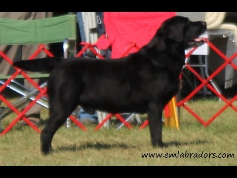 How to Find a Good Breeder?