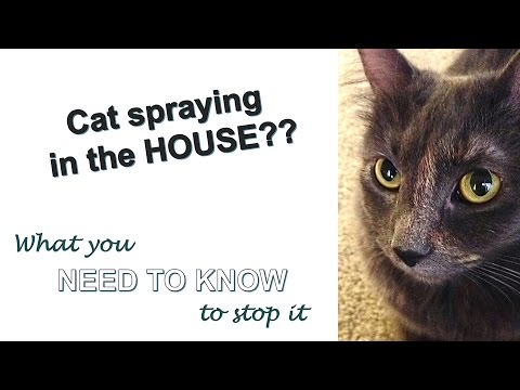 Stop cat spraying FOREVER