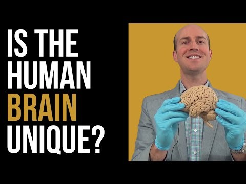 How the human brain is different from other animals