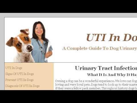 UTI Symptoms In Female Dogs