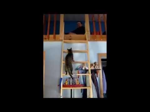 Cat climbs a ladder