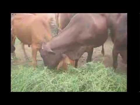 Pre-feasibility: Mukhtar Dairy Farm Call +92 (0) 300 8402812 April 18 2010 Manga Mandi Pakistan
