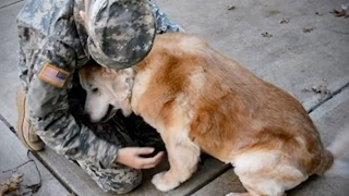 Dogs Meet Their Owner sAfter A Long Time 🐶 [Funny Pets]