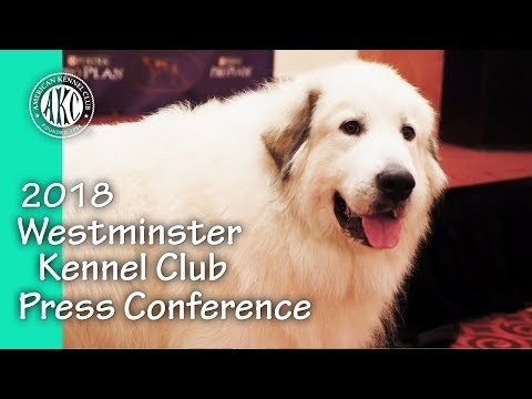 2018 Westminster Kennel Club Press Conference