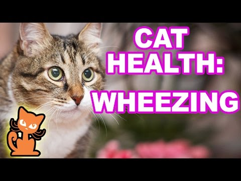 Cat Wheezing: What should I do if my cat is wheezing?