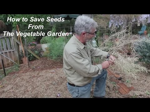 How to Collect Seeds from the Vegetable Garden