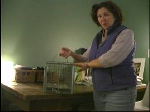 Understanding Feral Cats : Set a Feral Cat Trap