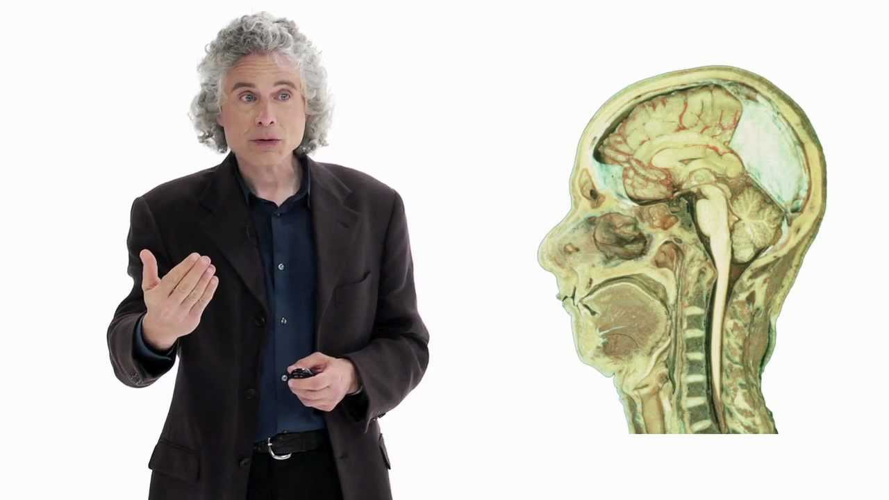 Steven Pinker: Linguistics as a Window to Understanding the Brain | Big Think