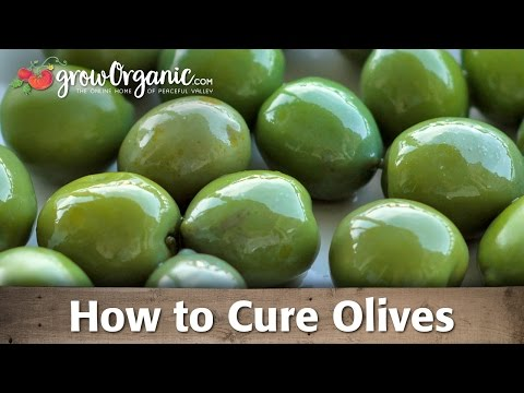 How to Cure and Preserve Your Own Olives
