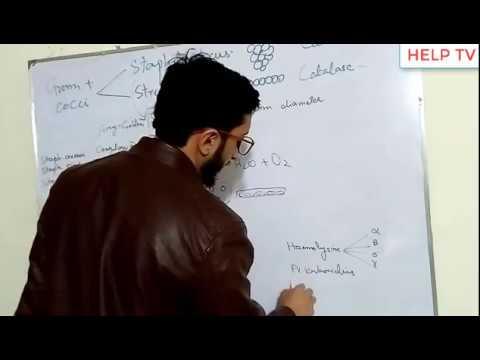 Staphylococcus Urdu Hindi