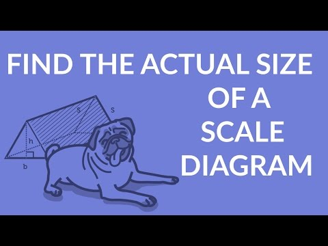 ʕ•ᴥ•ʔ How to Find the Actual Size of a Scale Diagram