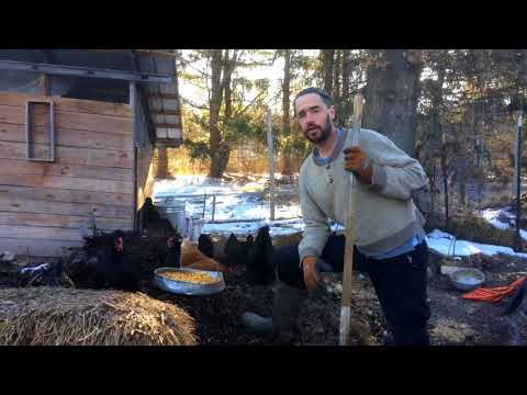 Chicken Compost - End of Winter Review of Windrow Design
