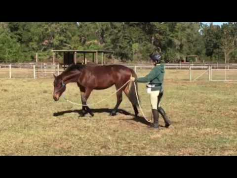 Clicker Training to put head down at trot
