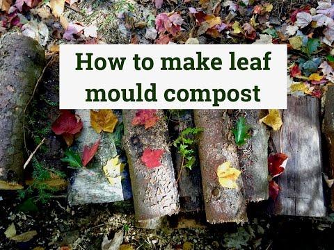 How to make Leaf mould compost