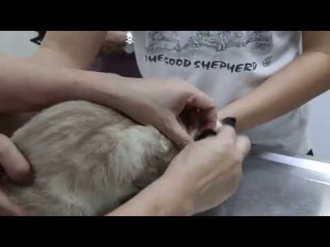 A cat has bald patches on the body and backside Pt 1