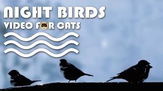 CAT TV - Night Birds. Bird Video for Cats to Watch.