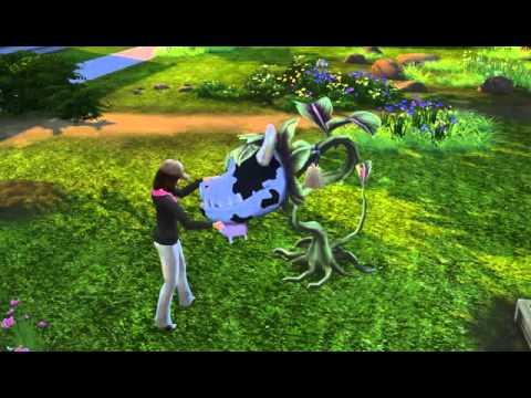 Feeding the Cowplant