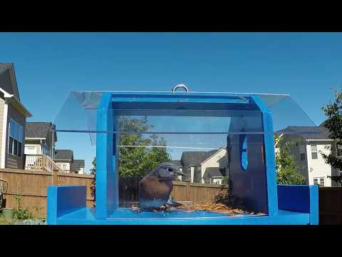 Mr Chuck's Bluebird Observation Feeder