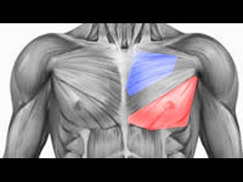 Easiest Way To Bring Up Your Chest - Lower Pecs