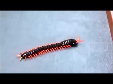 Smyths Toys - Radio Control Centipede