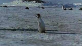 Love of Parents (Emperor Penguin - part III)