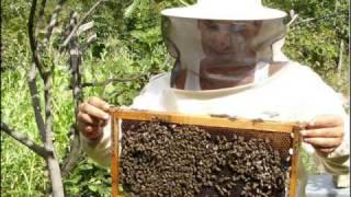 Download Matt McGinn- The Big Effen Bee Video