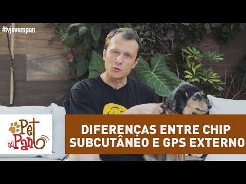 Pet na Pan #35 - Diferenças entre chip subcutâneo e GPS externo