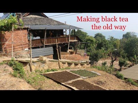 Artisanal Black Tea Processing