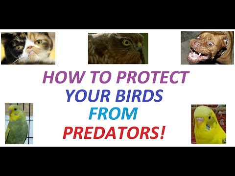 How to protect your birds from predators!