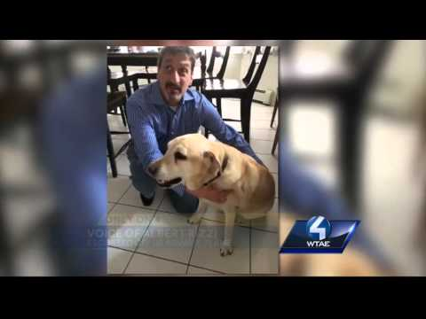 Blind man kicked off flight becasue of service dog
