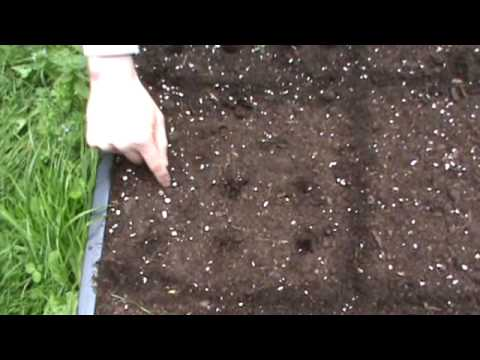 SmartGrowers - How to plant vegetable seeds in a raised bed