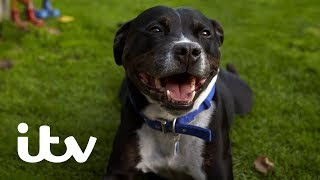 Paul O'Grady: For The Love Of Dogs | Stressed Out Staffie Zack Finally Gets a New Home! | ITV