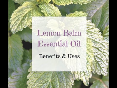 Lemon Balm or Melissa Essential Oil Benefits Indigestion, Cold Sores, Cramps and More