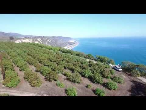 CalPure California Extra Virgin Avocado Oil