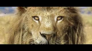 Spirit of Africa - Making Lion in C4D - Animal rigging in C4D - Crowd in C4D - Hair and fur in C4D