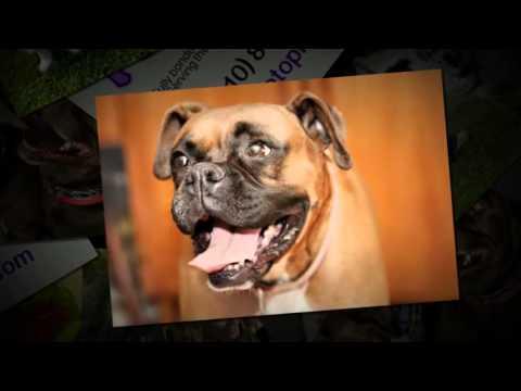 Pet Sitter in Marina Del Rey - Call (310) 883-5047 - Marina Del Rey Pet Sitting