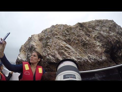 Boobies, So Many Boobies  I  Ballestas Islands  I  Peru Travel Vlog