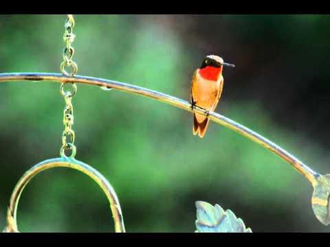Perched Hummingbird on the Mobile Hummingbird Feeder w/ Leaf Design -Plow & Hearth