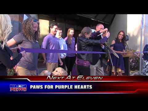KUSI Evening News Teases Paws for Purple Hearts Grand Opening