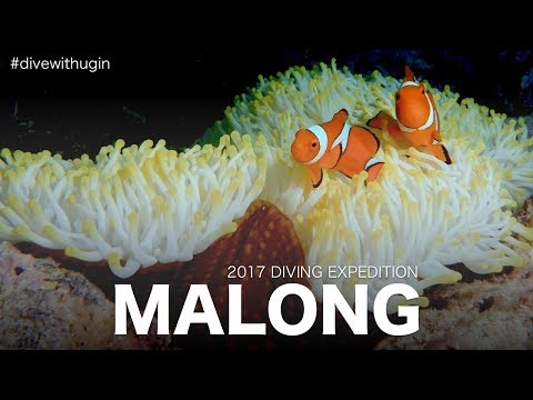 Malong Wall - Phi Phi Island - Scuba diving 2017