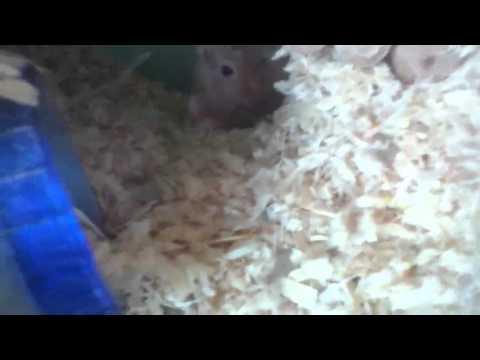 Why my gerbils so quiet