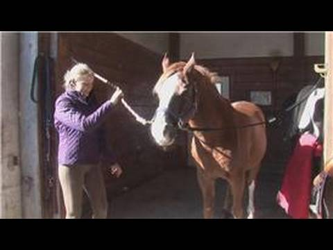 Horse Care : How to Buy a Pony