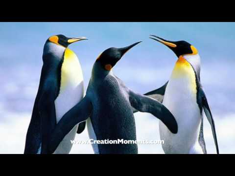 Penguins with Sunglasses (Part 1 of 2)
