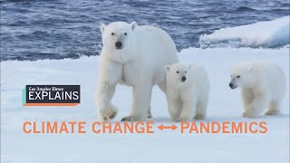 How pandemics are linked to climate change