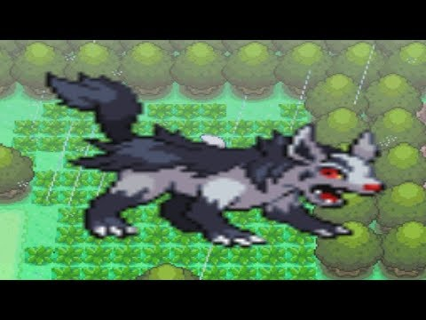 How to find Mightyena in Pokemon Diamond