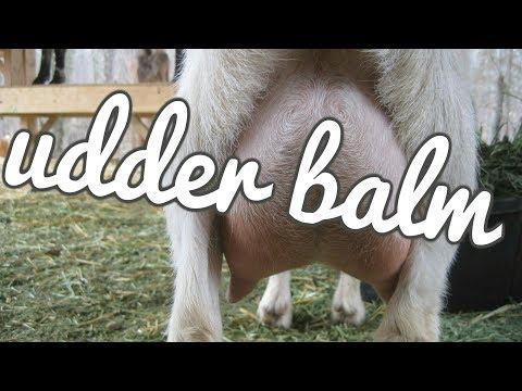 How to Make Udder Balm for Goats