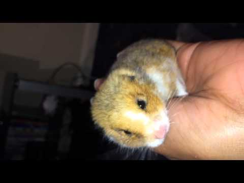 Amazing Video, Dead hamster brought back to life.