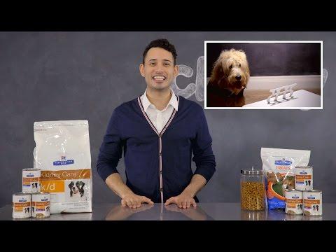 Hill's Prescription Diet k/d Kidney Care Dog Food
