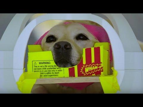 Dog MRI | Studying The Dog Brain | Inside the Animal Mind | BBC