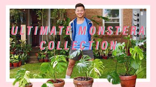 How to Care for your Variegated Monstera Deliciosa